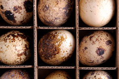 Quail eggs, full frame Royalty Free Stock Photography