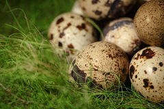 Quail eggs on green grass Royalty Free Stock Photos