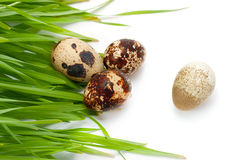 Quail eggs are and green grass. Royalty Free Stock Photography