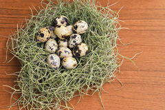 Quail eggs in the green nest on wooden texture Royalty Free Stock Photo