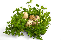 Quail eggs with greenery. Royalty Free Stock Photos