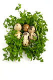 Quail eggs with greenery. Royalty Free Stock Photo