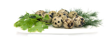 Quail eggs with greens on white saucer Stock Photos