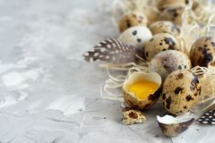 Quail eggs close up. Quail eggs on a grey background close up Stock Photos