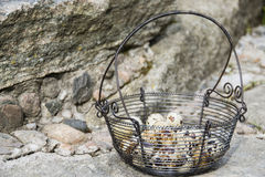 Quail eggs. A group of quail eggs in a basket Stock Photo