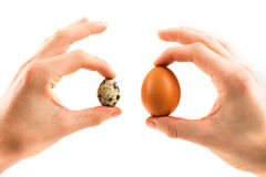Quail eggs and hand Stock Images
