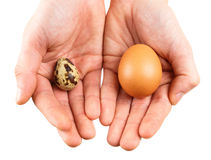 Quail eggs and hand. Royalty Free Stock Images