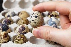 Quail eggs in a hand Royalty Free Stock Photos