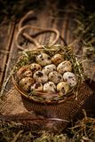 Quail eggs in hay nest. Over dark old wooden background stock images