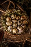 Quail eggs in hay nest. Over dark old wooden background stock photo