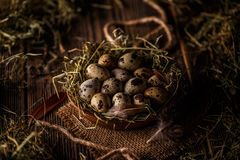 Quail eggs in hay nest. On wooden background royalty free stock photography