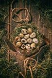 Quail eggs in a hay nest. Studio shot of quail eggs in a hay nest stock photo