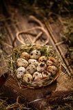 Quail eggs in hay nest. On wooden background stock photo