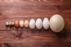 Free Quail Eggs, Hen Eggs, Goose Eggs, Ostricg Egg Stock Images - 121335504