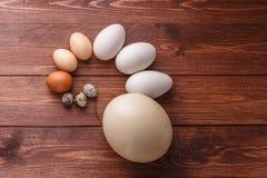 Quail eggs, hen eggs, goose eggs, ostricg egg stock images