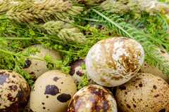 Quail Eggs and Herbs Royalty Free Stock Images