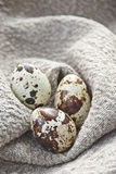 Quail eggs on homespun fabric Stock Photography