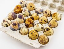 Quail eggs in an individual carton.  Royalty Free Stock Images