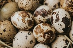 Quail eggs laying on straw, full frame shot Stock Image
