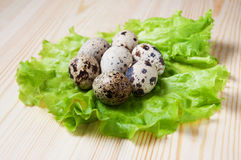 Quail eggs on a lettuce leaf Royalty Free Stock Images
