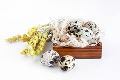 Quail eggs lie in a brown wooden box on a white background. Near dry yellow flowers. Easter royalty free stock image