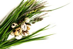 Quail eggs lie on fresh grass. royalty free stock photos