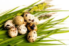 Quail eggs lie on fresh grass. The isolated image royalty free stock image