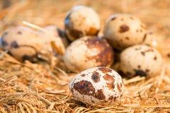 Quail eggs lie on straw Stock Photos