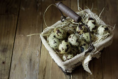 Quail eggs in a lined wire basket, on straw, on barn wood background, Easter, countryside interior, farming Royalty Free Stock Photo