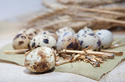 Quail eggs on linen cloth Stock Images