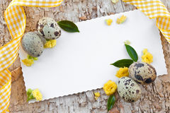 Quail eggs and little flowers Royalty Free Stock Photos