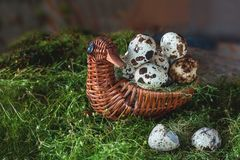 Quail eggs lying in a beautiful basket in the shape of a bird on the green tender grass before painting. The horizontal frame royalty free stock photography