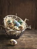 Quail eggs in metal basket Royalty Free Stock Photo