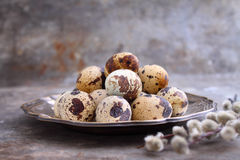 Quail eggs in a metal plate on a rustic background. With branches of willow Royalty Free Stock Images