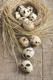 Quail eggs in nest. Fresh quail eggs in a nest of straw Royalty Free Stock Photos