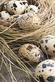 Quail eggs in nest. Quail eggs in a nest on a wooden background Royalty Free Stock Photos