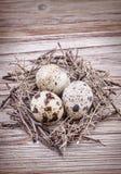 Quail eggs in nest Royalty Free Stock Photos