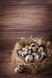 Quail eggs in nest Stock Images