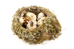 Quail eggs in a nest Royalty Free Stock Photography