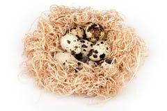 Quail Eggs Nest Royalty Free Stock Photo