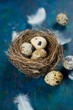 Quail eggs in a nest Stock Photos