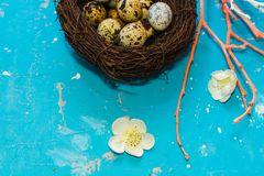 Quail eggs in the nest on blue background. happy Easter stock photography