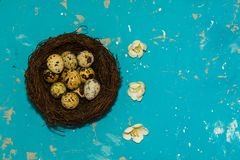 Quail eggs in the nest on blue background. happy Easter.  stock photography