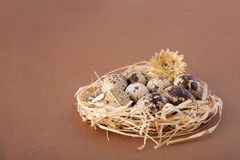 Quail eggs in a nest on brown. Background Stock Photography