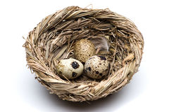 Quail eggs in the nest close-up Stock Photos