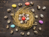 Quail eggs in a nest with colorful decorative eggs for Easter laid out around wooden rustic background top view close up Royalty Free Stock Photo