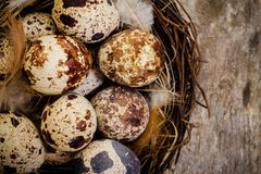 Quail eggs in a nest on a dark wooden background Royalty Free Stock Photography