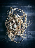 Quail eggs in the nest Royalty Free Stock Photos