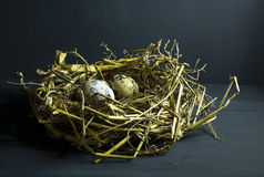 Quail eggs in a nest with feathers. Royalty Free Stock Images