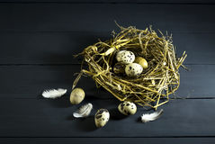 Quail eggs in a nest with feathers. Royalty Free Stock Photos